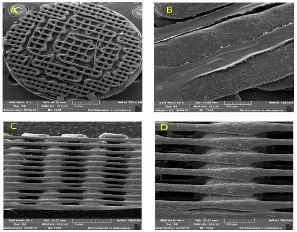 3D bio sample- SEM